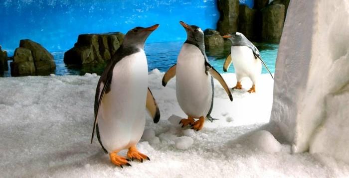 difference-manchot-pingouin-image-mignon-chez-le-zoo