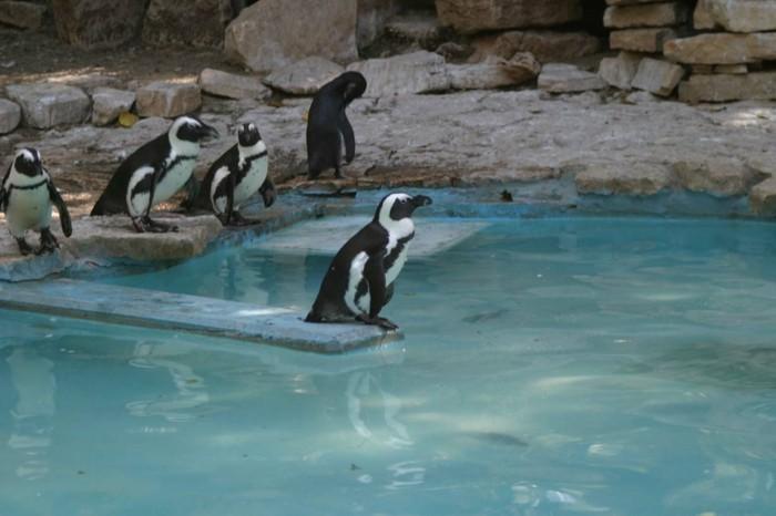 difference-manchot-pingouin-image-mignon-piscine