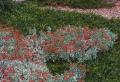 Plante COUVRE sol – un tableau de couleurs naturelles dans votre jardin