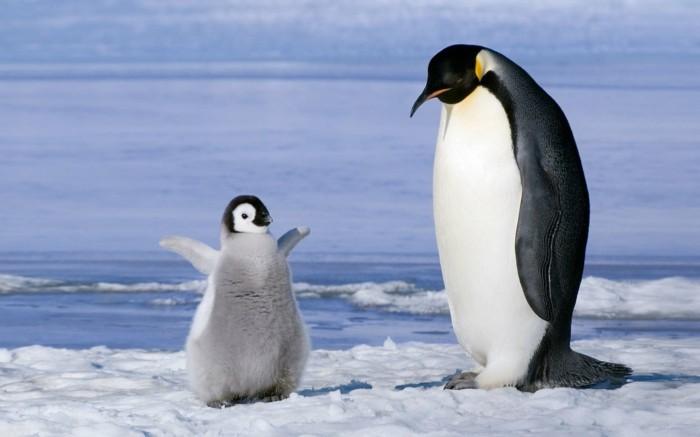 est-ce-que-les-pingouins-volent-belle-photo-bebe-et-maman