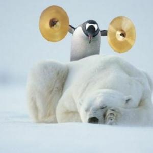Les manchots - découvrez-les sur 50 des plus mignonnes et amusantes photos!