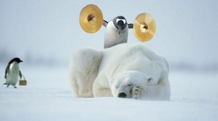 est-ce-que-les-pingouins-volent-belle-photo-voir-photo-amusante