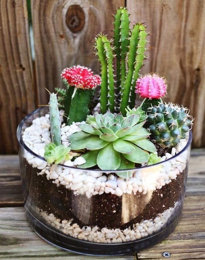 exemple-classique-de-jardin-miniature-dans-un-bol-en-verre-amenagement-jardin-superbe-cactus