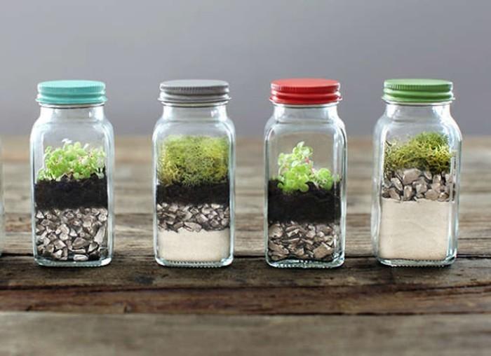 fabriquer-un-terrarium-plantes-places-dans-de-petites-salieres-idee-amenagement-terrarium-sympa