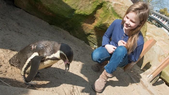 fascinante-difference-entre-manchot-et-pingouin-enfant