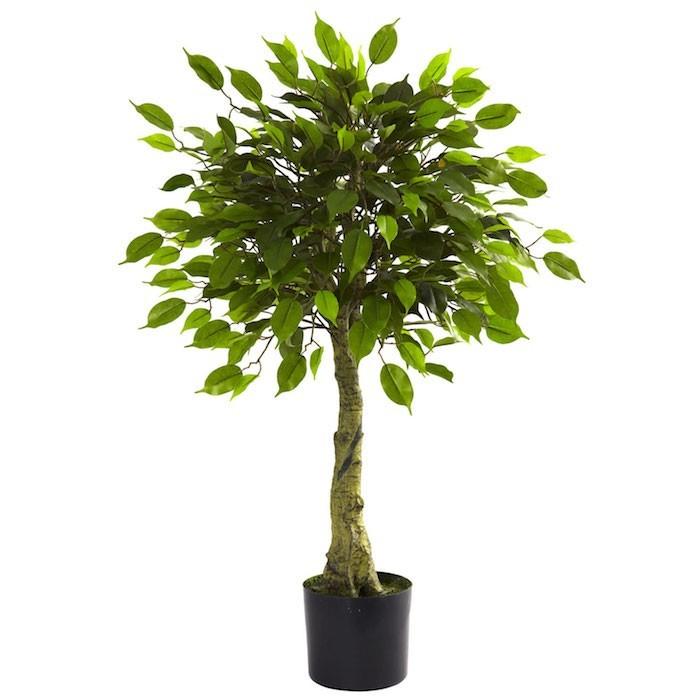 ficus-plante-depolluante-plantes-depolluantes-pollution-air-interieur-chambre-bureau