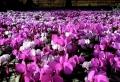 Fleurs d'HIVER – Des couleurs chaudes dans la neige