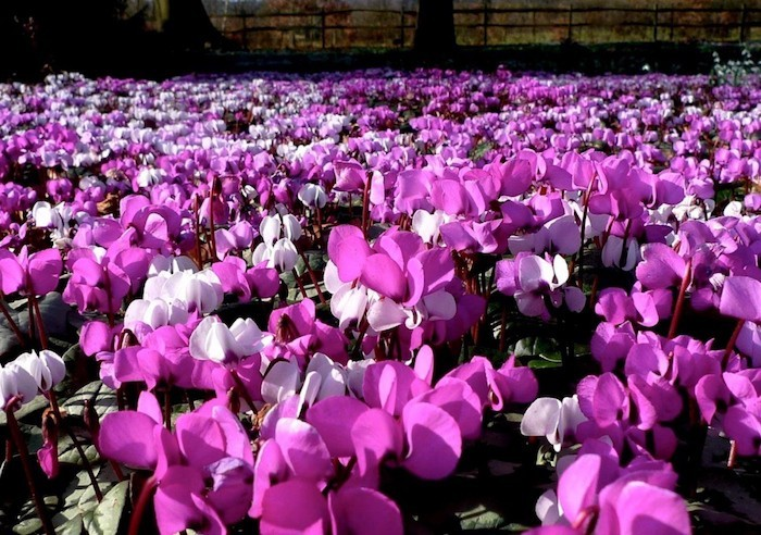 Fleurs d\'HIVER – Des couleurs chaudes dans la neige ...