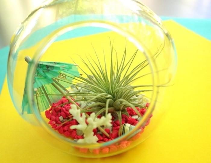 terrarium pour plantes tuto pour le faire et plus de 70. Black Bedroom Furniture Sets. Home Design Ideas
