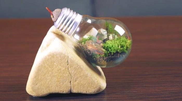 idee-pour-un-terrarium-plante-dans-une-petite-ampoule-electrique-idee-decor-terrarium-fantastique