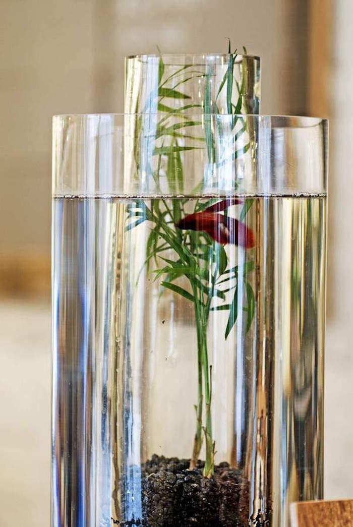 jardin-aquatique-interium-pour-plantes-aquarium