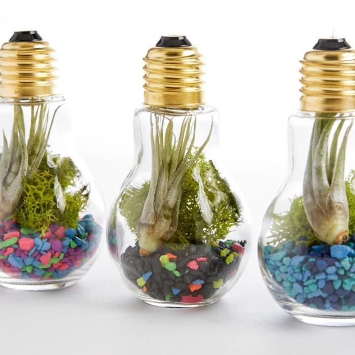jardin-miniature-dans-une-ampoule-electrique-idee-comment-faire-un-terrarium-soi-meme