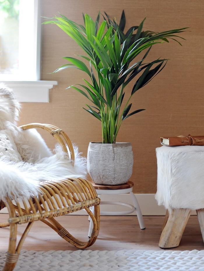 kentia-plante-interieur-purifiante-air-assainir-appartement-chambre-bureau