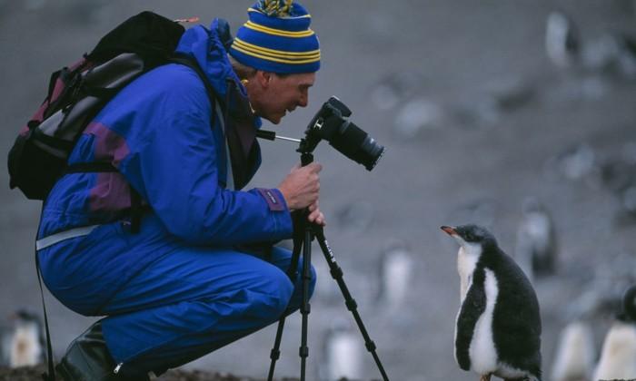 Ecotourist and Gentoo penguin chick, Half Moon Island, Antarctica.