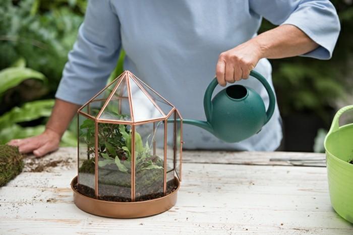 les-soins-et-l-entretien-sont-le-plus-important-idee-pour-un-terrarium-plante-magnifique