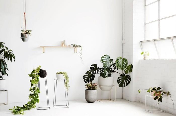 lierre-philendendron-plantes-depolluantes-assainir-air-detoxifiantes-pollution-interieur