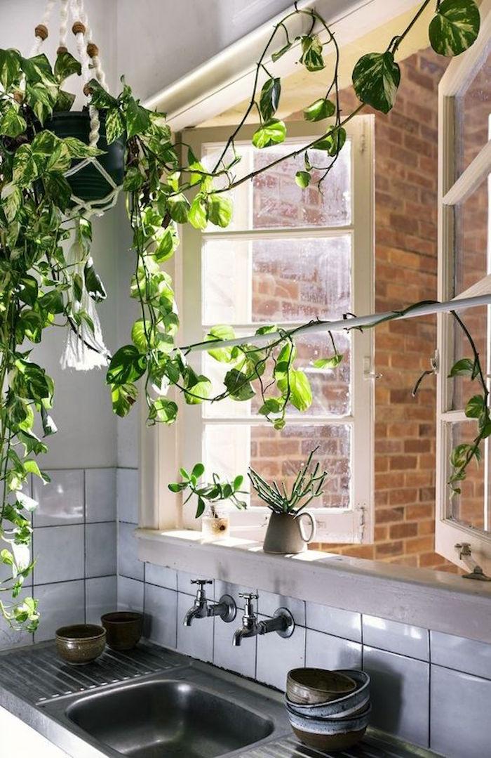 lierre-plante-d-interieur-depolluante-pollution-assainir-detoxifiantes