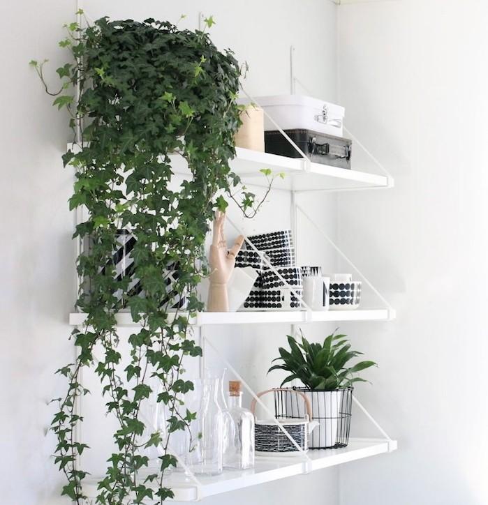 lierre-plantes-d-interieur-depolluantes-plante-depolluante-cuisine
