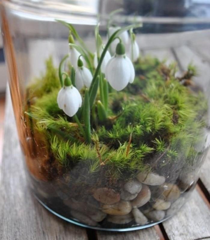 magnifique-idee-perce-neige-dans-un-terrarium-jardin-miniature-sympa