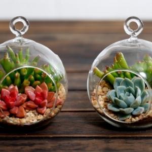 Terrarium pour plantes - tuto pour le faire et plus de 70 super modèles