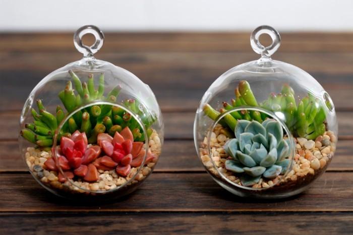 mini-terrarium-charmant-plante-terrarium-tres-convenable-pour-la-decoration-de-votre-interieur