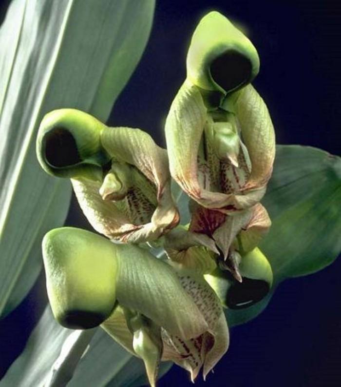 orchidee-rare-des-hommes-emballes-dans-leurs-habits