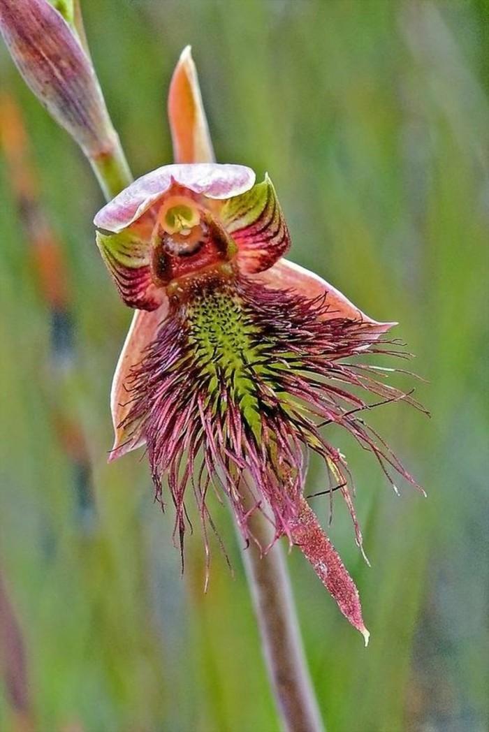 orchidee-rare-floraison-des-orchidees-fleurs-uniques