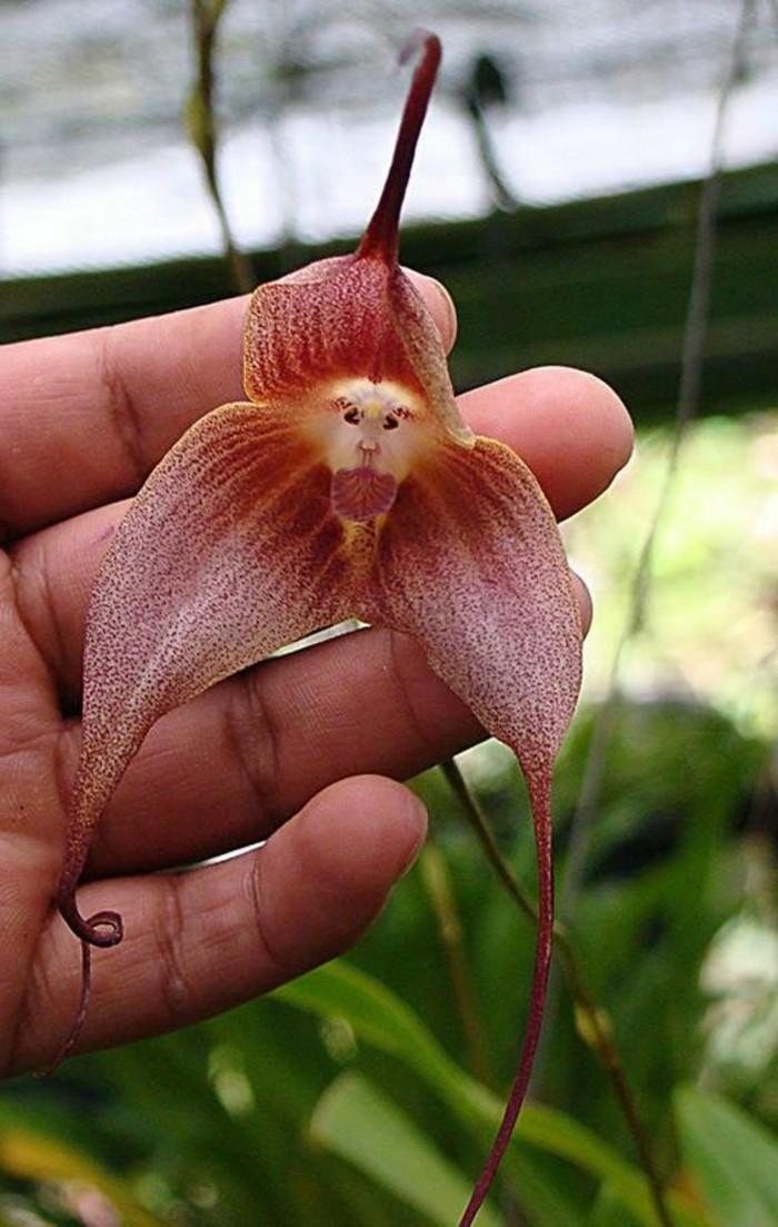 orchidee-rare-les-plus-bizarres-especes-dorchidees