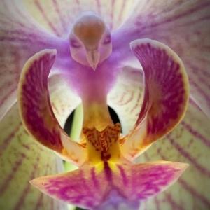 L'orchidée rare la plus bizarre ou quand les orchidées imitent la vie