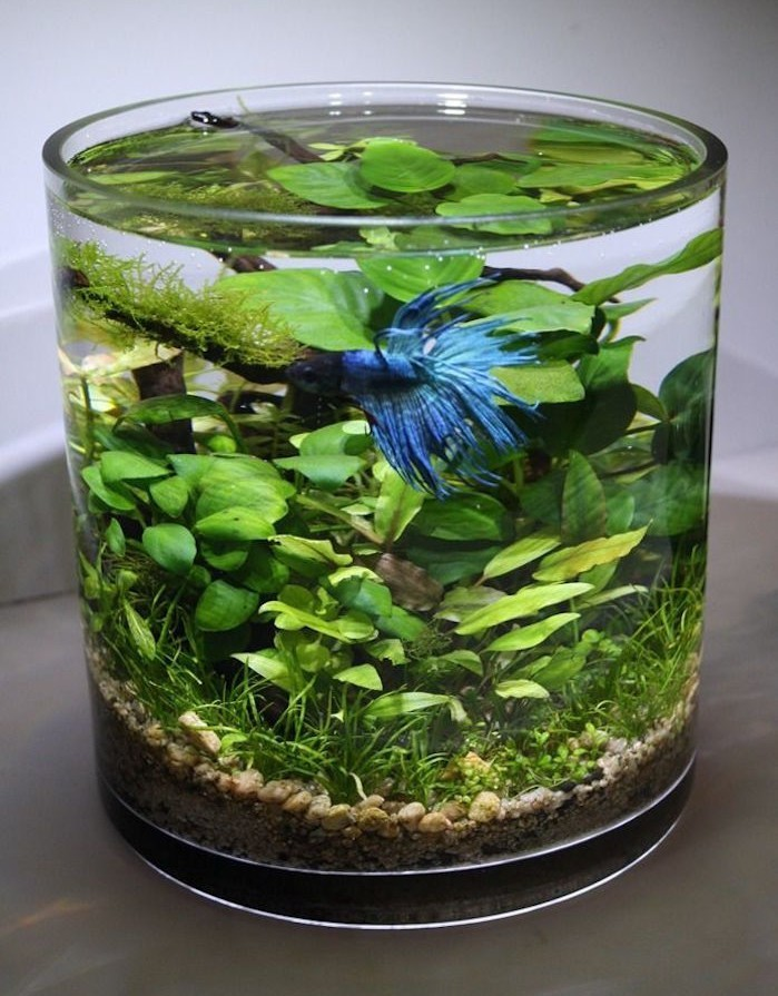 plante aquatique appartement