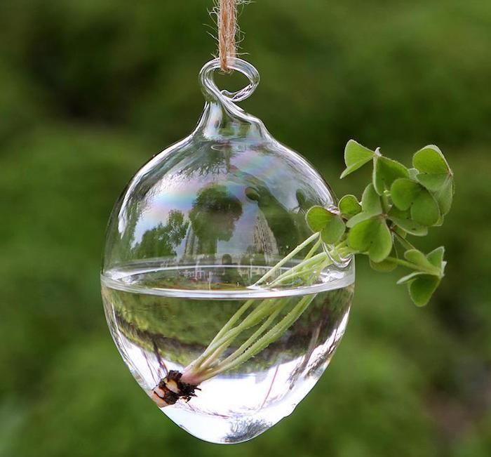 petit-vase-bocal-suspendu-pour-plante-aquatique-immergee