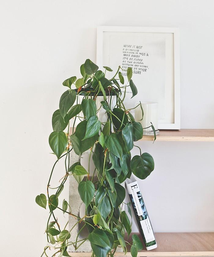 philodendron-plantes-depolluantes-plante-chambre-bureau-pollution-assainir-air