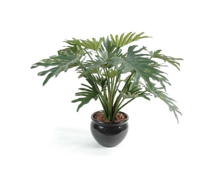 philodendron-selloum-plantes-depolluantes-interieur-plante-de-bureau-assainir-l-air