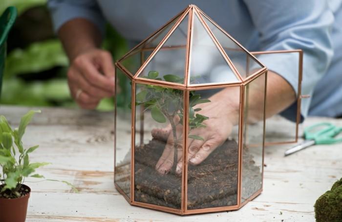 placer-les-plantes-dans-le-terrarium-une-belle-idee-pour-creer-un-jardin-miniature