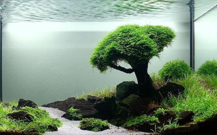 plante-aquatique-plantes-aquarium-bassin-d-ornement