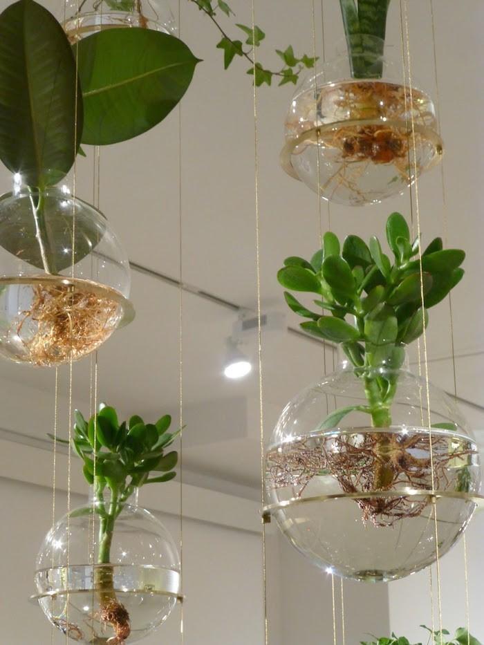 plante-aquatique-suspendue-bocal-plantes-interium