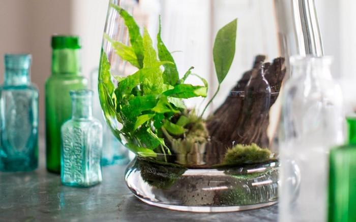 plante-aquatique-verre-maison-aquarium-interieur