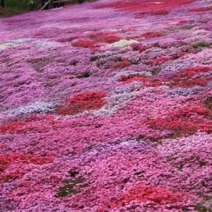 Plante COUVRE sol - un tableau de couleurs naturelles dans votre jardin