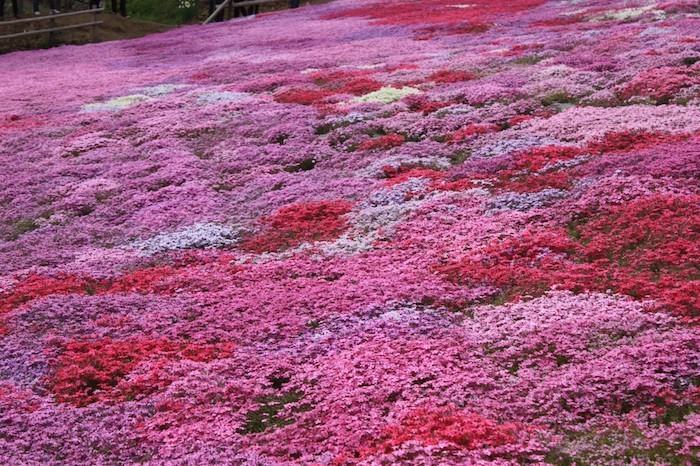Plante couvre sol un tableau de couleurs naturelles dans - Tapis chauffant pour plante ...