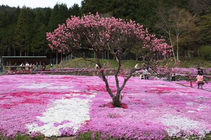plante couvre sol fleurs recouvrantes vivacesjpg