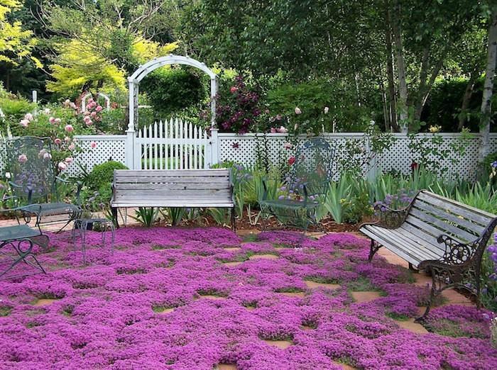 Plante couvre sol un tableau de couleurs naturelles dans for Plante de jardin vivace