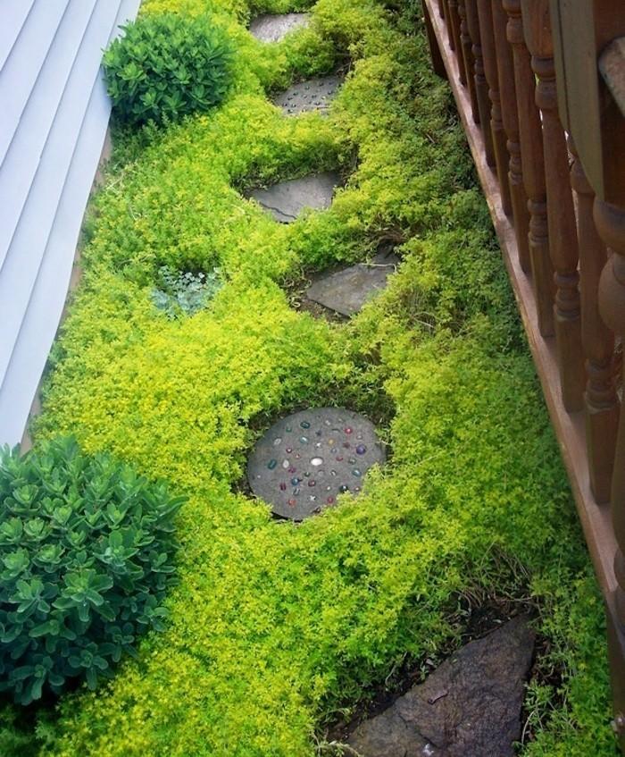 Plante couvre sol un tableau de couleurs naturelles dans for Plante verte jardin