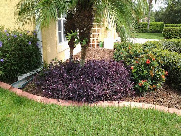 plante-couvre-sol-plantes-pour-talus-cotoneaster-rampant