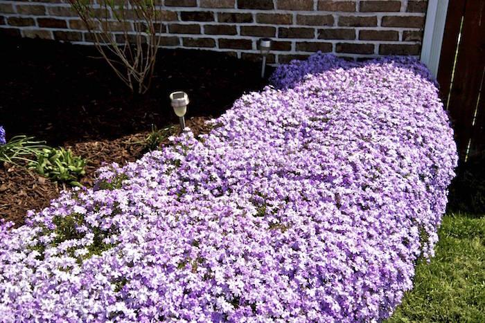 plante-couvre-sol-plantes-rampantes-fleurs-talus