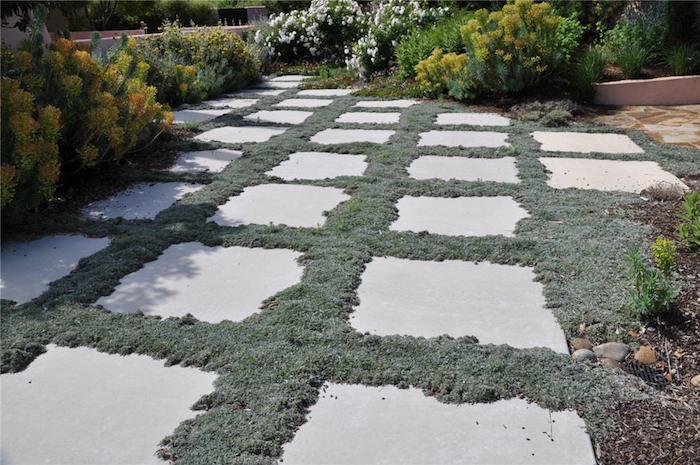 plante-couvre-sol-plantes-rampantes-fleurs