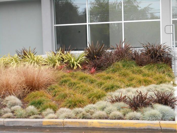 plante-couvre-sol-plantes-tapissantes-plantes-rampantes