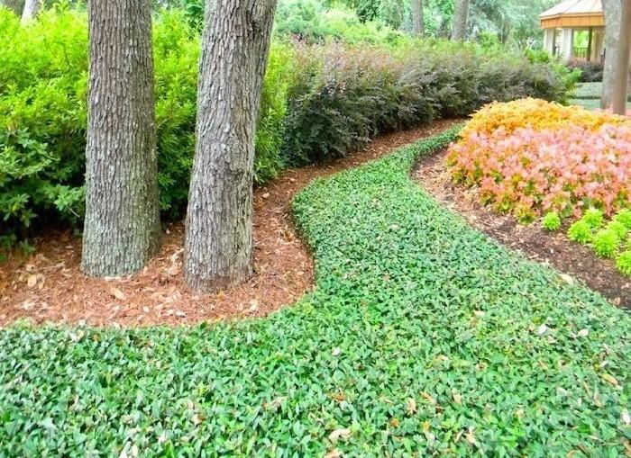plante couvre sol plantes tapissantes vivaces