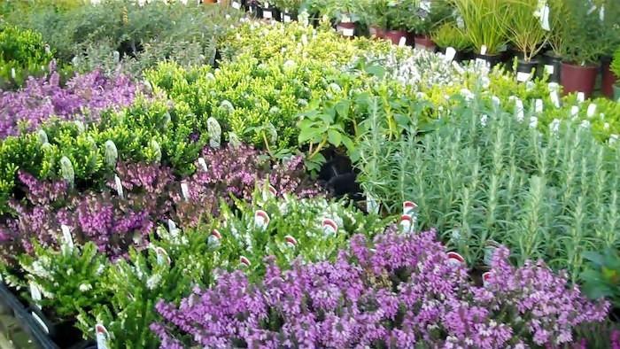 plante-couvre-sol-talus-plantes-rampantes