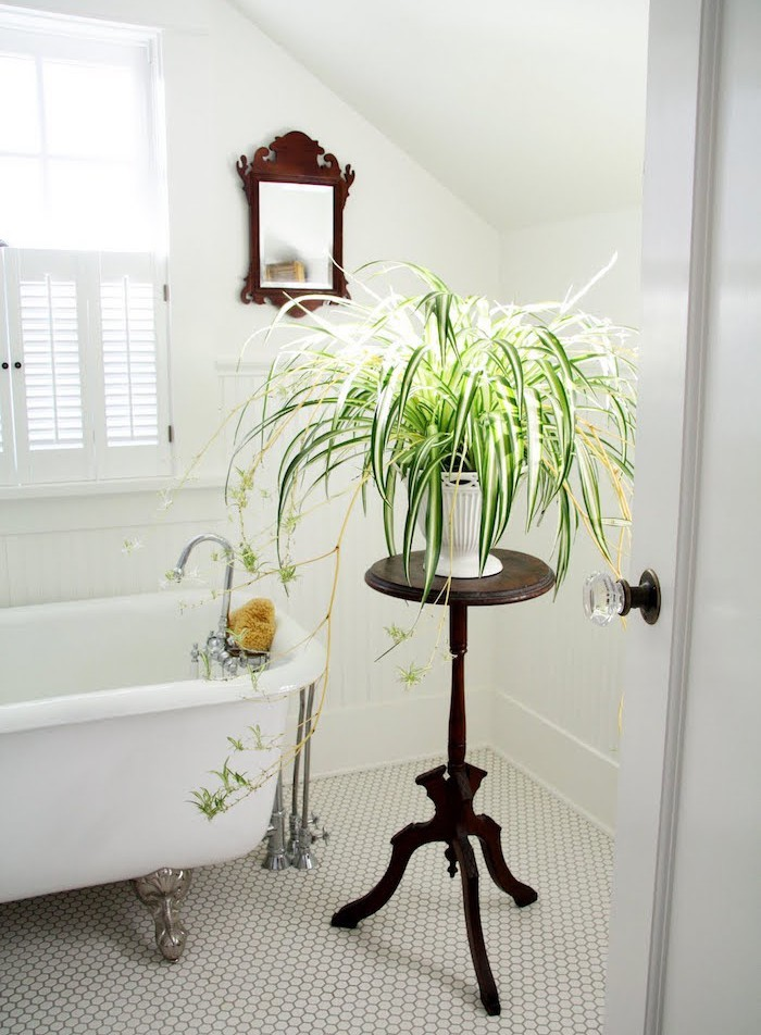 plante-depolluante-detoxifiante-assainir-air-chambre-bureau-pollutionle-le-chlorophytum