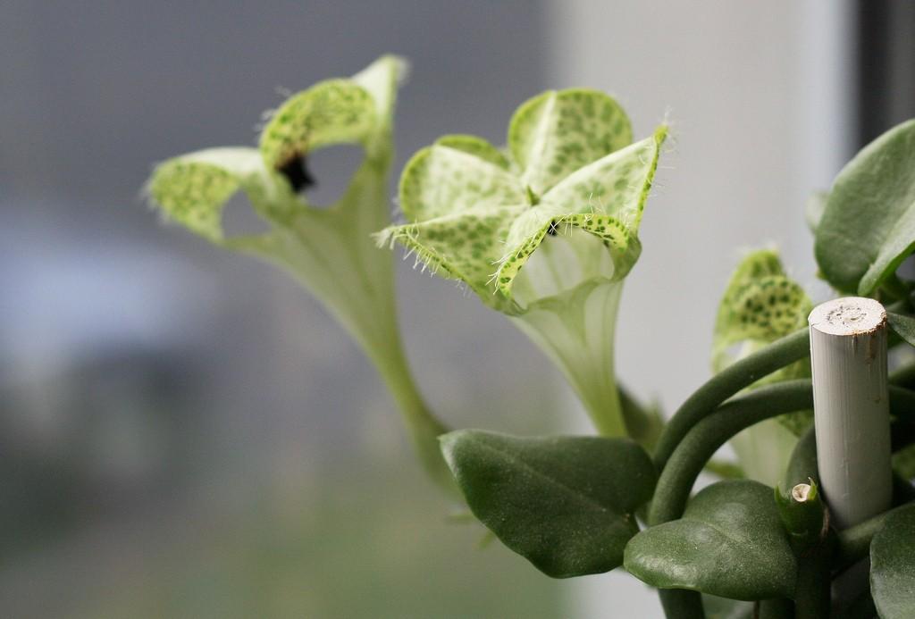 plante succulente une le on d 39 conomie d 39 eau. Black Bedroom Furniture Sets. Home Design Ideas